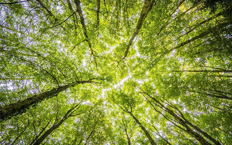 green-got - © Felix Mittermeier / Pexels - grandparisdurable.org